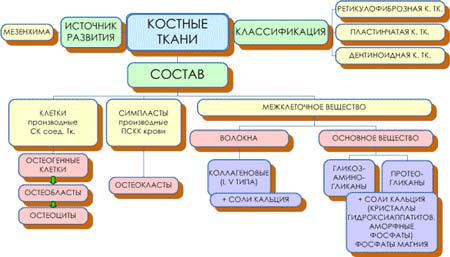 структура тканей